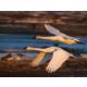 Creamers Field Migratory Waterfowl Refuge within walking distance