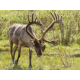 Candlewood Suites Fairbanks- gateway to wildlife viewing in Alaska
