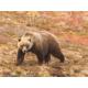 Candlewood Suites Hotel Fairbanks- Gateway to Denali National Park
