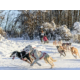Limited North American Championship Sled Dog Race