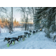 Yukon Quest Int'l Sled Dog Race - Candlewood Suites Hotel