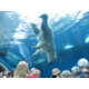 Pittsburgh Zoo & Aquarium-18 miles from hotel in Highland Park