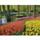 Les fleurs de Keukenhof