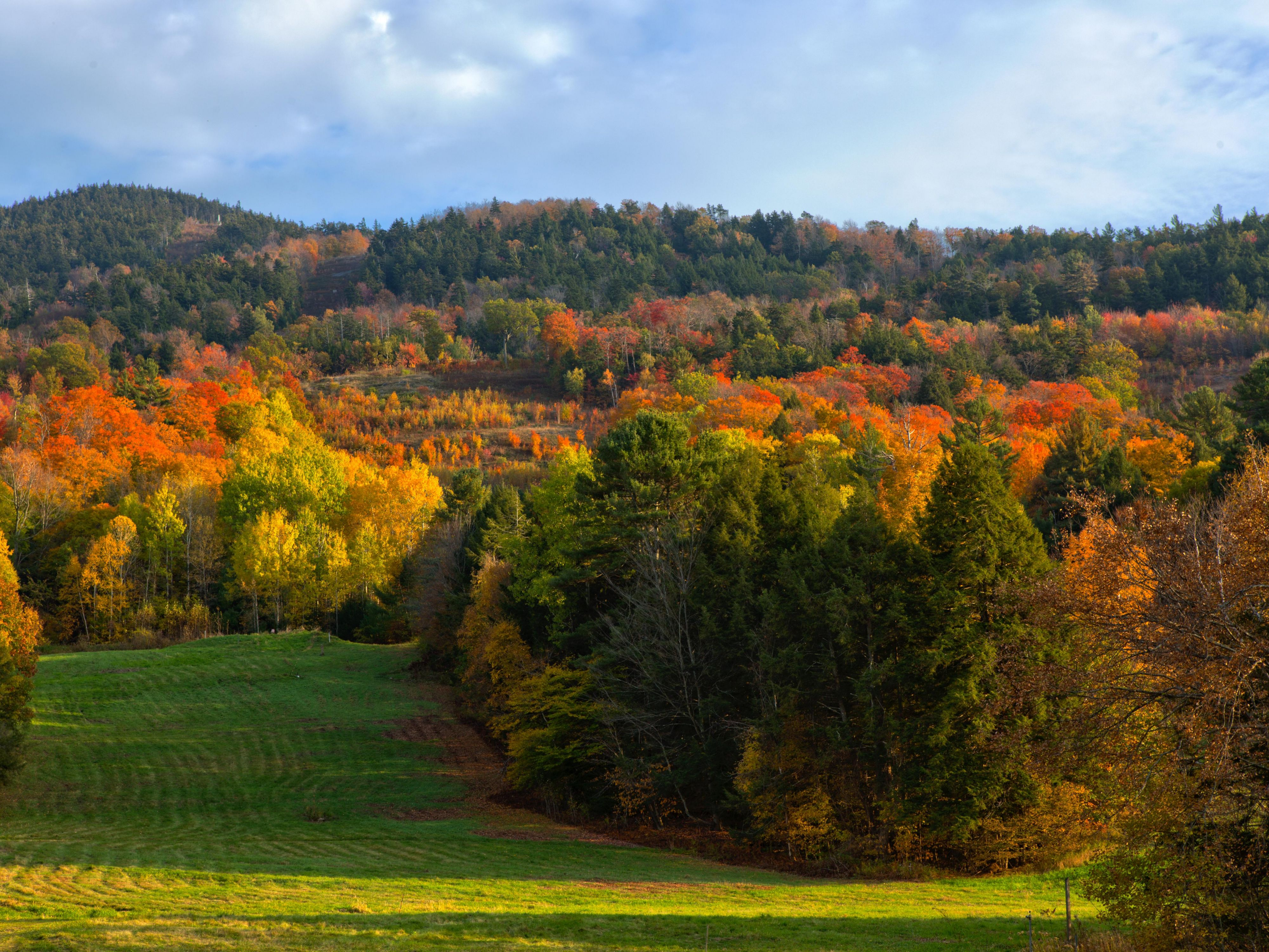 Autumn brings fall foliage