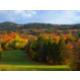 Autumn brings fall foliage