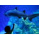 Our hotel is minutes away from Denver Downtown Aquarium