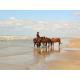 Seaside Horses Ballades