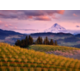Enjoy the beautiful views around Oregon Wine Country