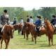 Horse shows enjoy the Linn County Fair and Expo Center