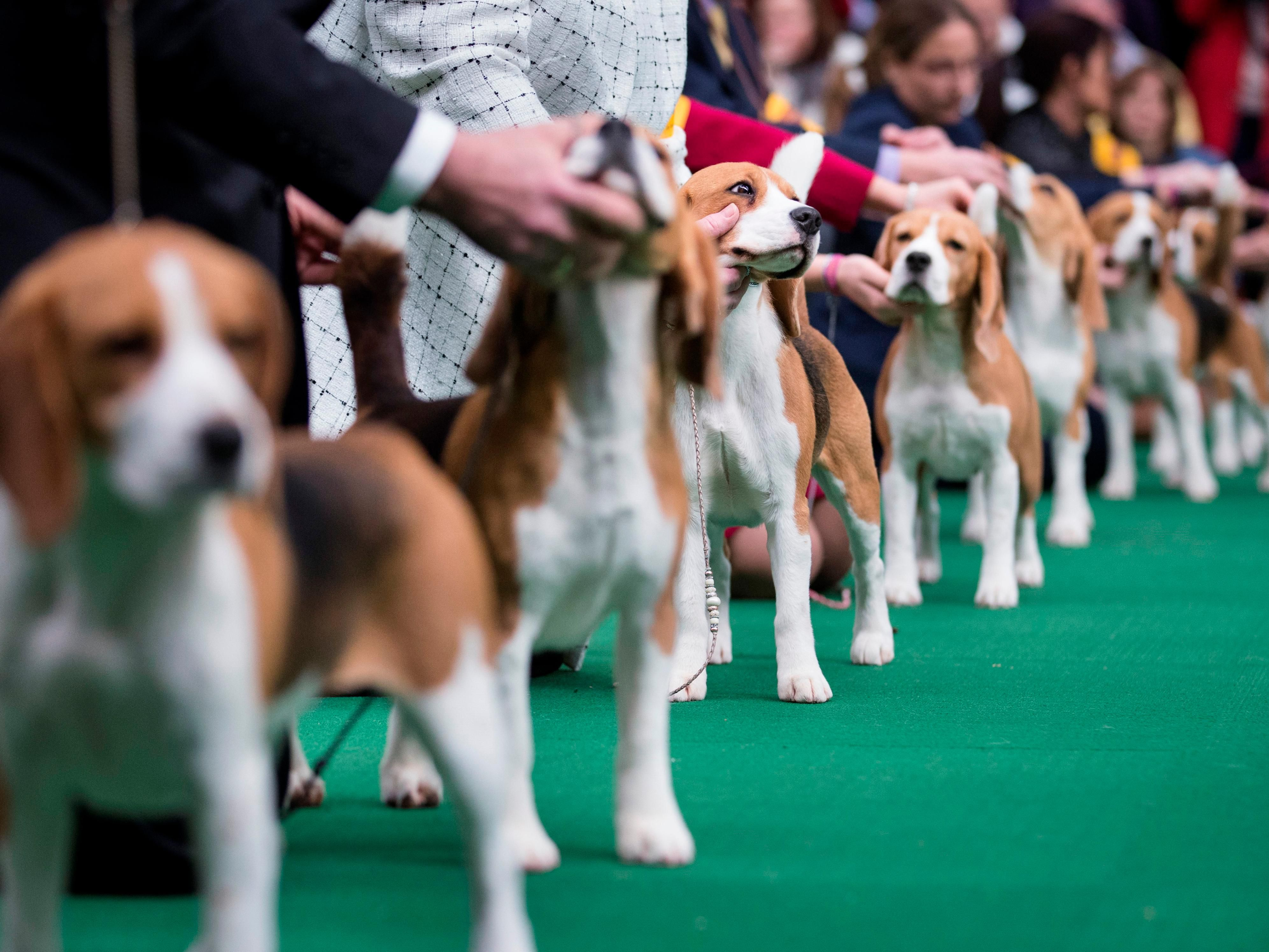 Proud to host many National and Regional Dog Shows and events