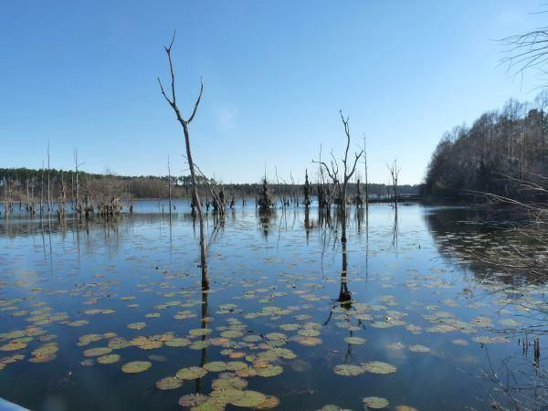 Silver Lake Wildlife Management Area
