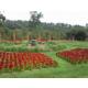 Gardens at Vanderbilt Mansion