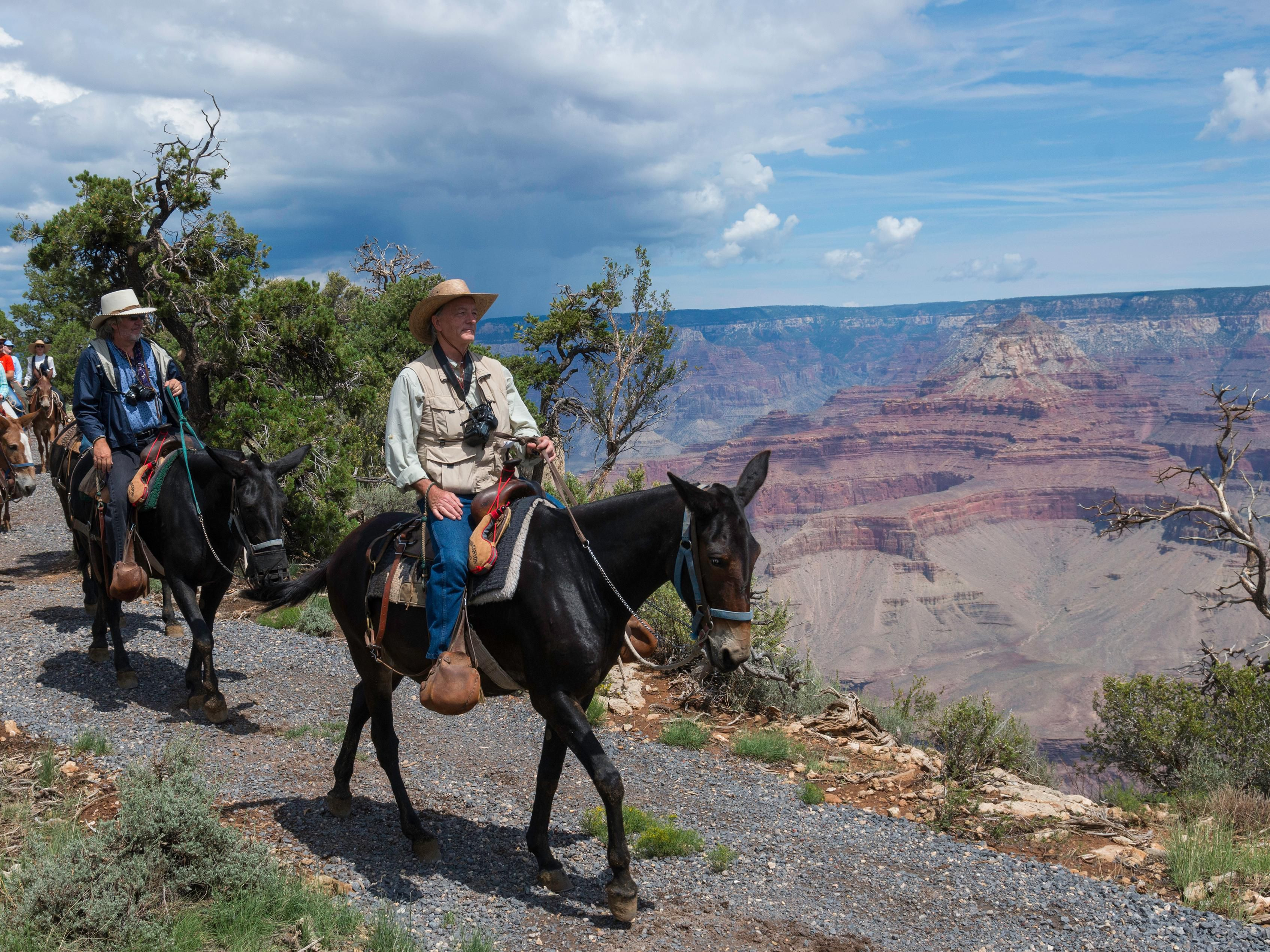 Take a mule ride down into the Grand Canyon or along the rim