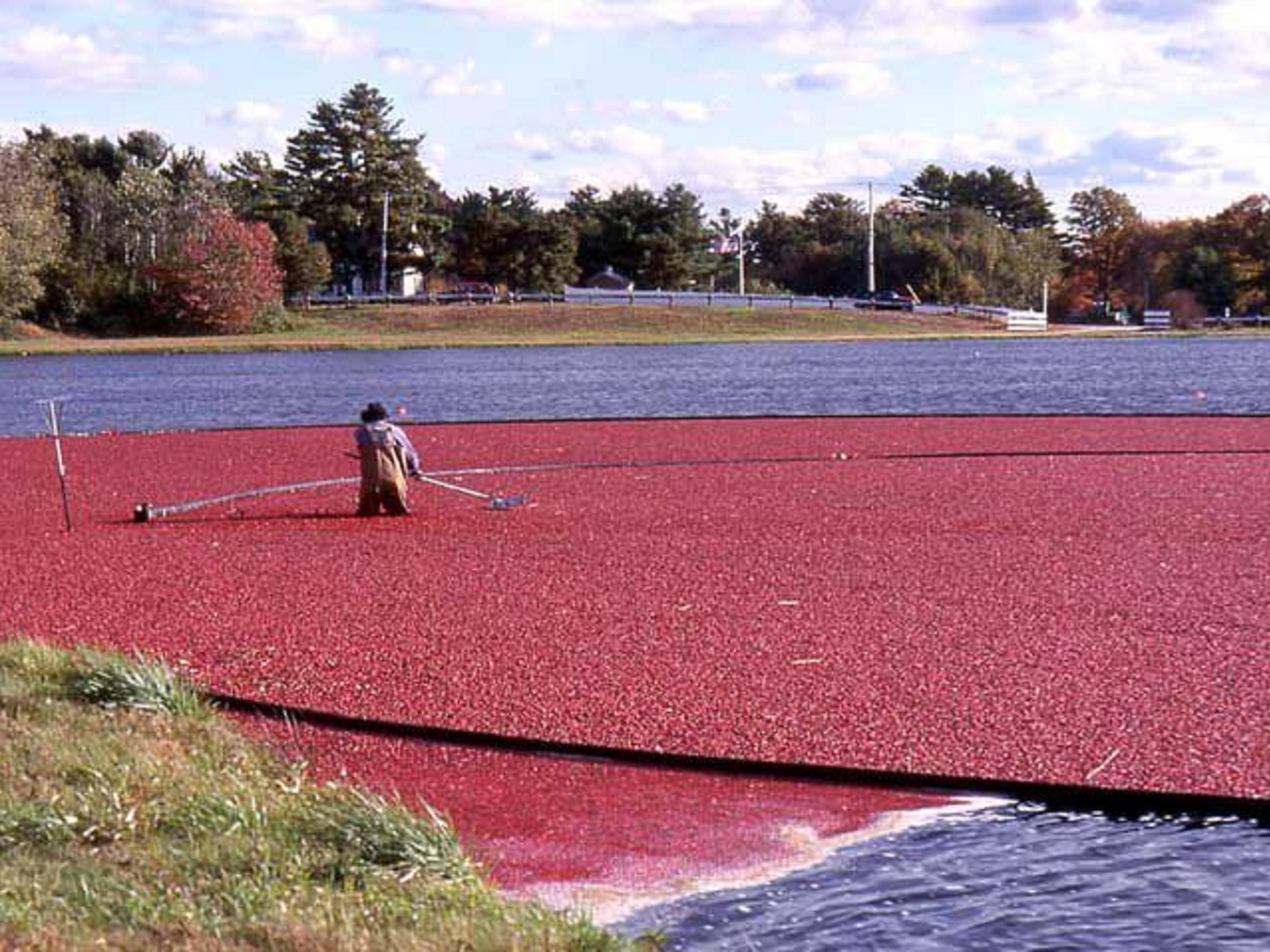 Welcome to Cranberry Country!