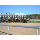 Tampa Bay Downs is a great way to spend the day in Tampa Bay!