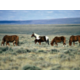 Wild Horses can be viewed while traveling through Wyoming.