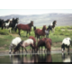 Watch for wild horses all around Sweetwater County
