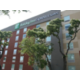 Exterior Holiday Inn Express and Suites San Antonio Med Ctr N