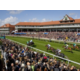 Enjoy a day at Chester Races
