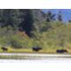Moose - Credit of NL Tourism