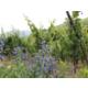 Partez à la découverte de la route des vins d'Alsace