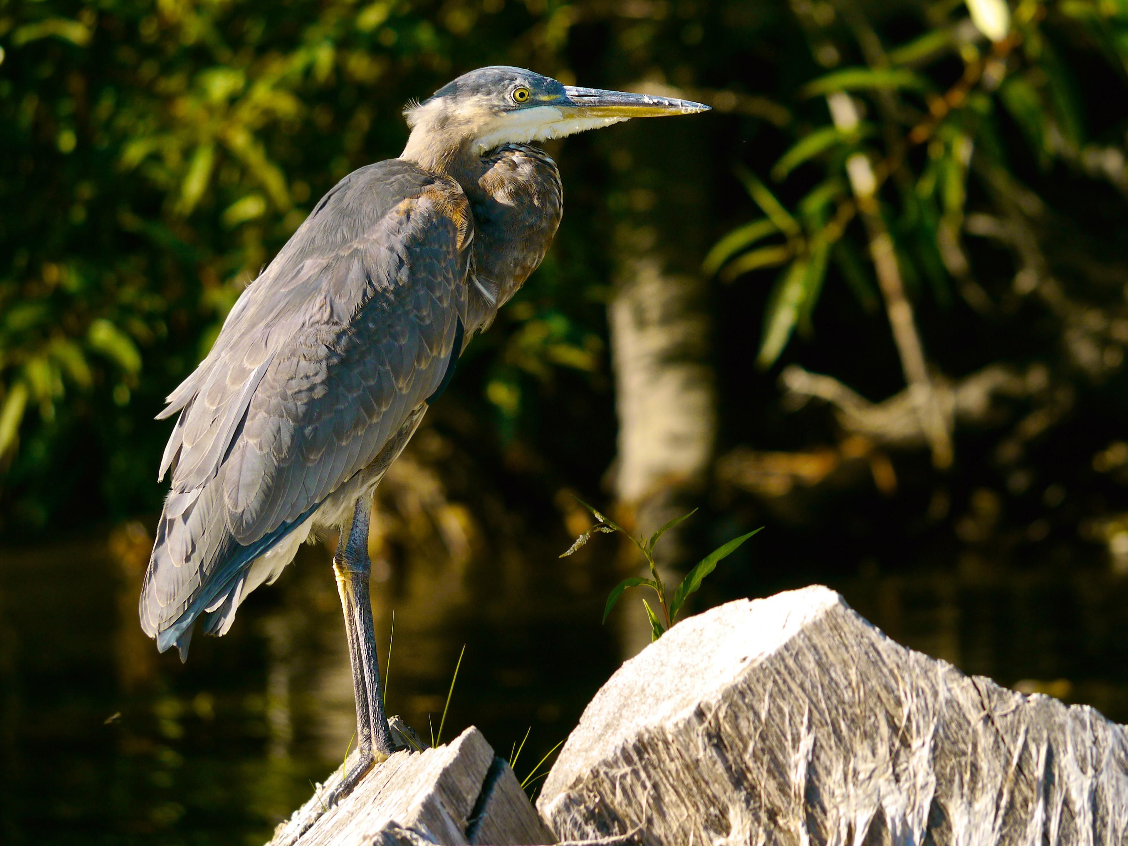 Wildlife Viewing on Klamath River
