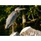 Wildlife Viewing on Klamath River