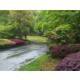 Scenery / Garden View