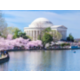 Area Attractions - Cherry Blossom , Museums, White House, Capital