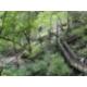Devil's Millhopper State Park