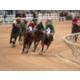 Delta Downs - Racetrack & Casino