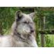 Beenham Wolf Trust - Mosi the Wolf