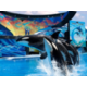 Enjoy family-friendly activities at SeaWorld Orlando Florida