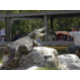 Enjoy a fun filled day at Gatorland Orlando adventure theme park