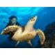 Diving Underwater Paradise