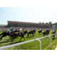Admire the Horse Racing