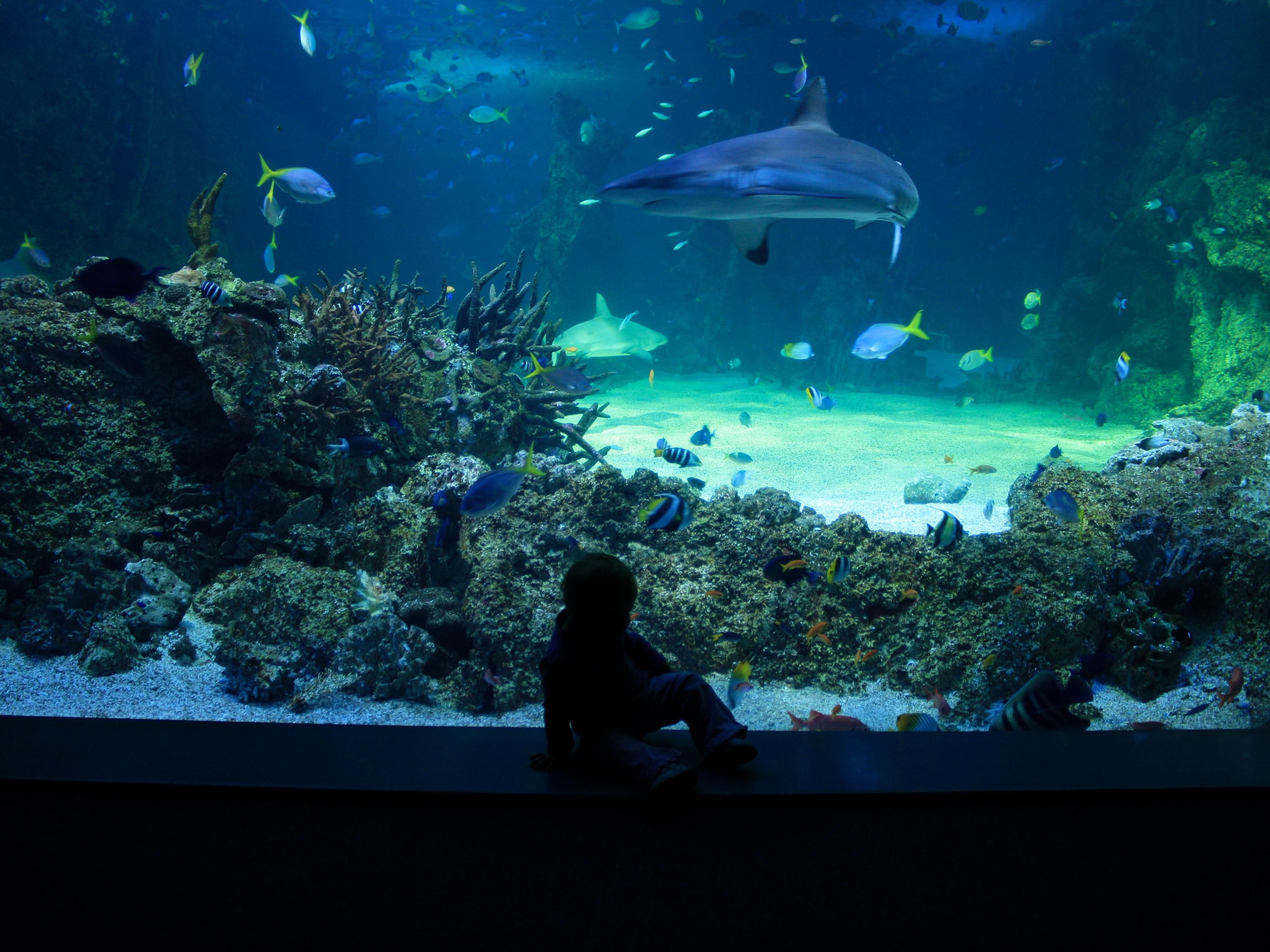 Sydney Aquarium, Darling Harbour