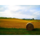 Seneca County Picturesque Farm Land