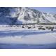 Wild Buffalo grazing in Yellowstone