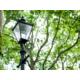 The leafy Norfolk Gardens await you