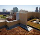 Green Roof - The roof of Hotel Indigo is fully planted out!