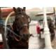 Carriage sightseeing at Wu Da Dao