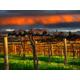 South Australian Winery Region