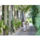 Tree-lined Entrance