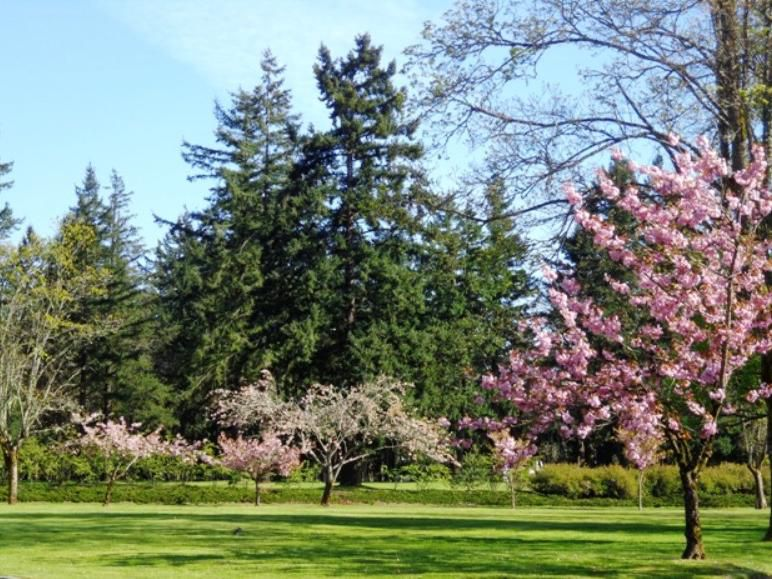 One of the beautiful parks located throughout McChord Field