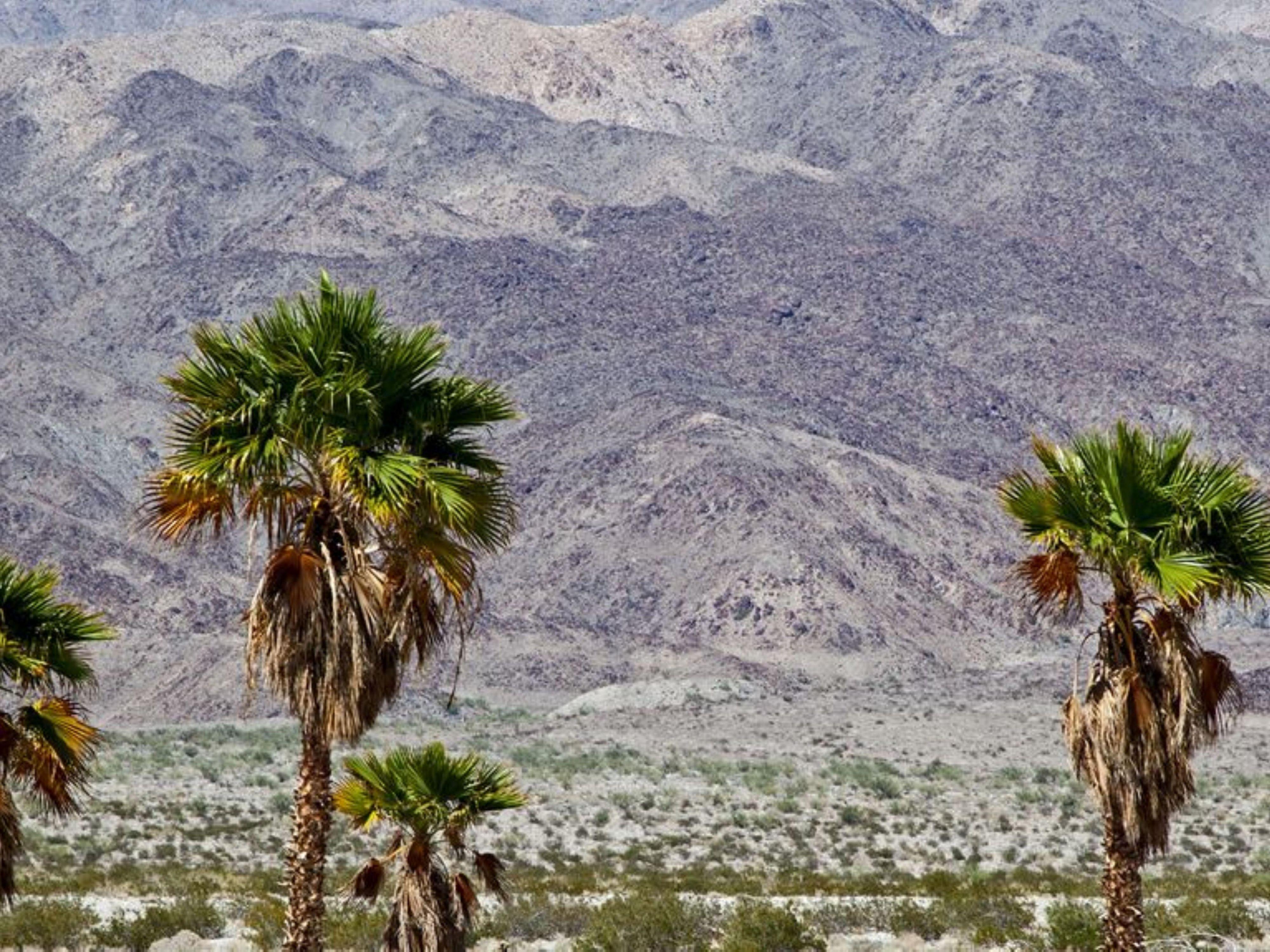 Speed datation Palm Desert ca BBM rencontres groupes Inde