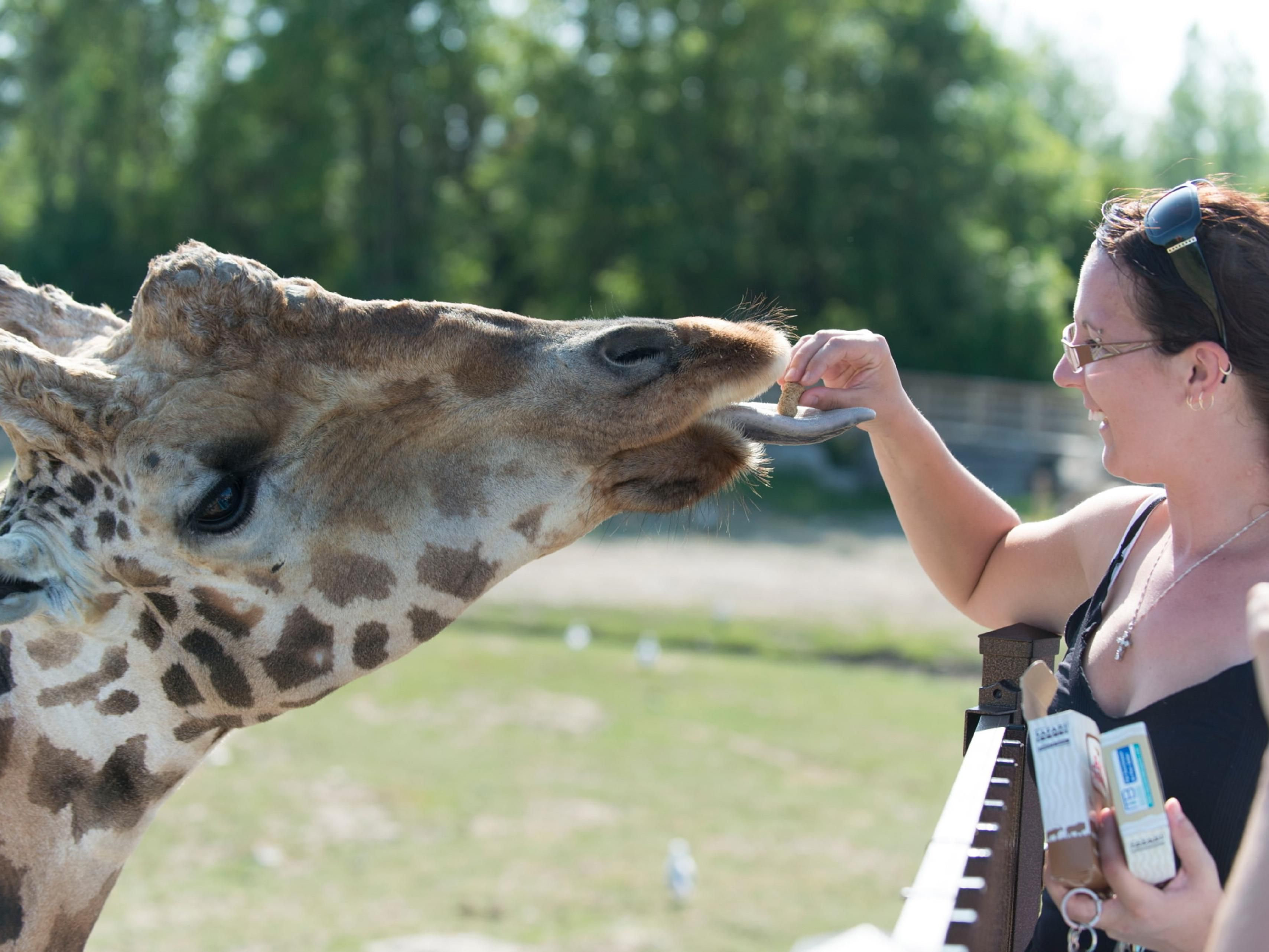 At Parc Safari you are encouraged to feed the animals!