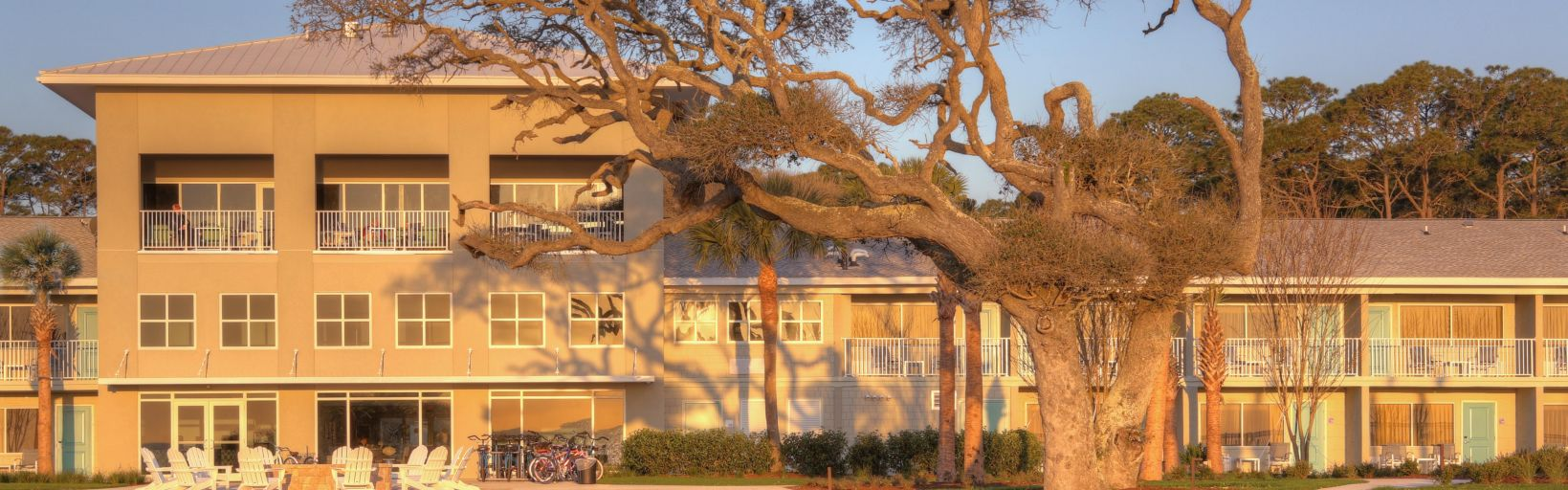 Sweeping Majestic Live Oak At Holiday Inn Resort Jekyll Island