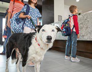 Dog in hotel lobby